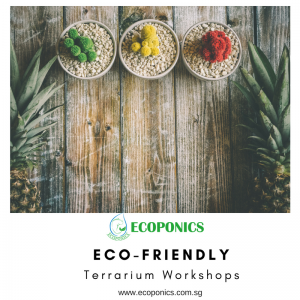 Which events are accordant for Terrarium Workshop Singapore?